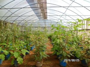 Greenhouse in Sri Lanka