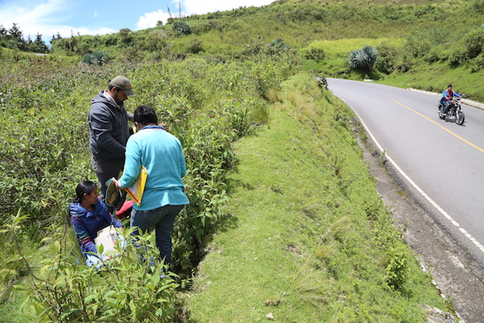 Partners in Latin America, search for wild eggplant growing by the roadside.