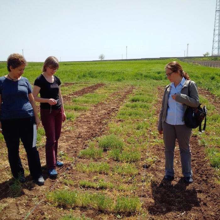 Waiting for the parasite to strike. Researchers Dr. Beybin Bucak, Dr. Kirsten Bett and Dr. Tuba Bicer (left to right) inspect a lentil field site in Kiziltepe, Turkey, for signs of infestation with the parasitic plant Orobanche. Photo courtesy: Albert Vandenberg Photo: Benjamin Kilian