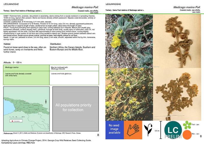 Seed collecting guide for Georgia - information sheets for sea medick (Medicago marina).