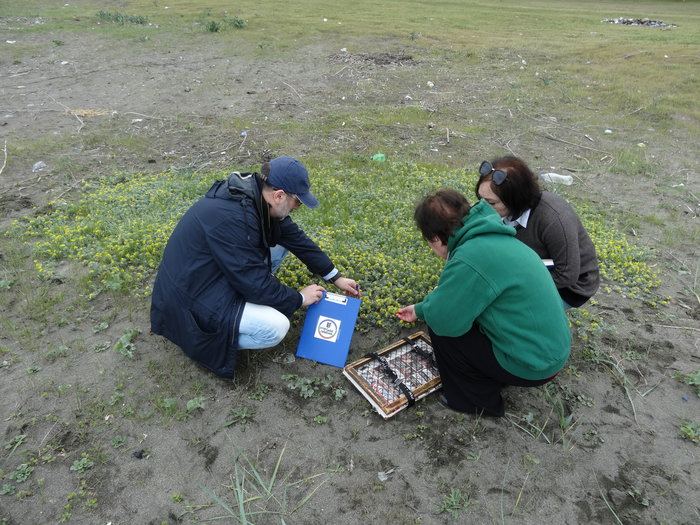 Collecting of sea medick specimens by David Kikodze and Manana Khutsishvili from Georgia's Institute of Botany , assisted by Izolda Machutadze from Batumi State University.