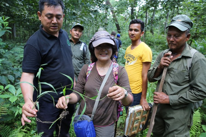 NARC senior scientists Deepa Singh Shrestha (centre) and Krishna Hari Ghimire (left) find Oryza meyeriana var. granulata in Chitrasen Forest in the buffer zone of Chitwan National Park.